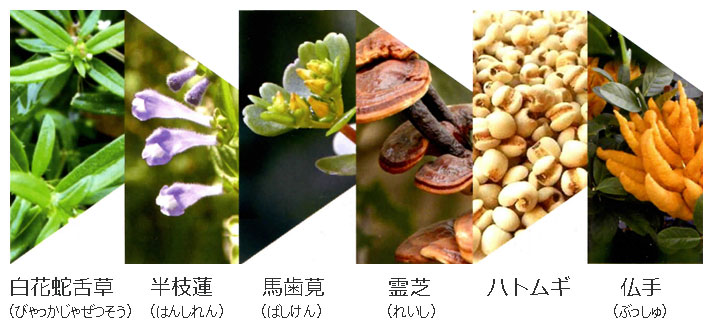 白花蛇舌草(びゃっかじゃぜつそう)