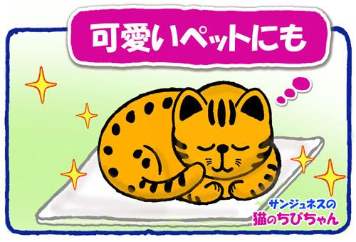 シンアース サンジュネスの愛猫ちびちゃん