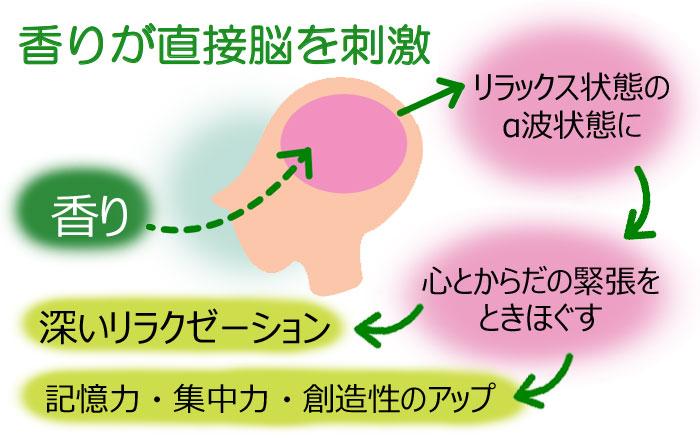 サーキュエッセンスが直接脳を刺激