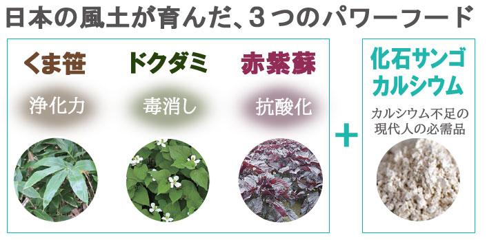 くま笹3つのパワーフード