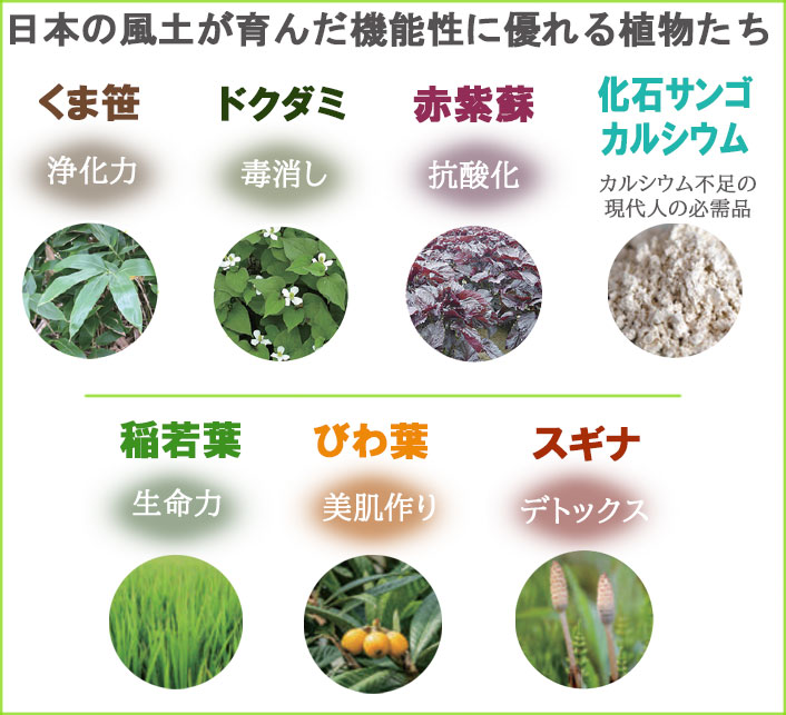 くま笹珪素ウィルプラス 機能性に優れる植物たち